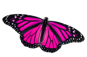 butterfly png pink