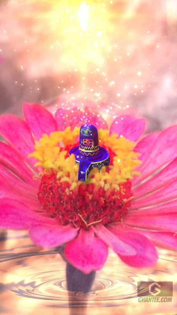 beautiful shivling on flower hd image